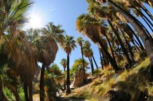 Palm Desert.2